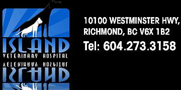 Island Veterinary Hospital